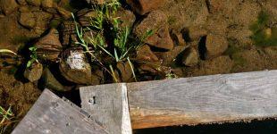 Basen ekologiczny ze złożem samoczyszczącym w ogrodzie - podsumowanie